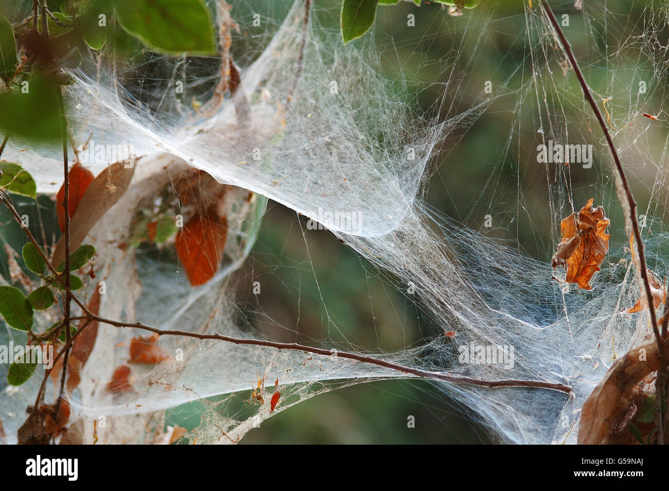 Old Spider web on dry plant - Stock Image