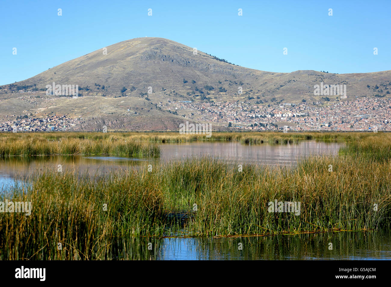 Totora reed fields, City of Puno in background, Puno, Peru - Stock Image
