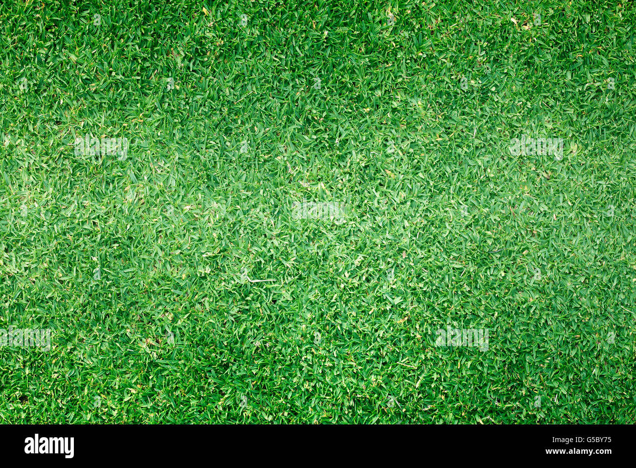 Golf Courses green lawn pattern textured background. Stock Photo