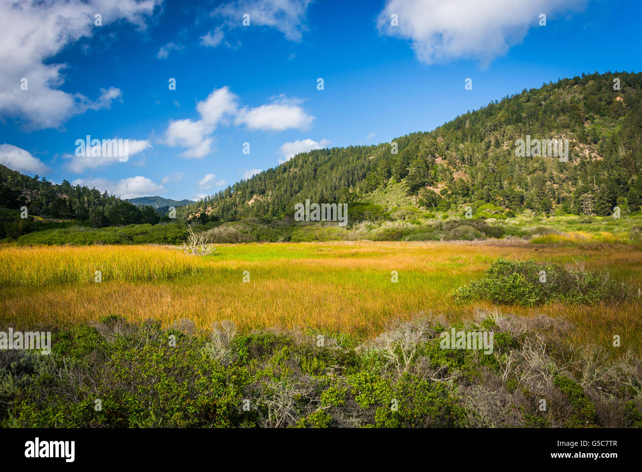 View of hills at Rancho Del Oso -  Big Basin Redwoods State Park, in California. Stock Photo