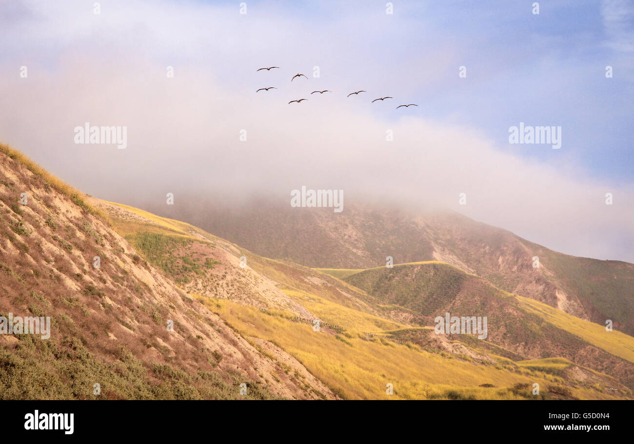 Group of birds flying in a group through fog and hills. - Stock Image