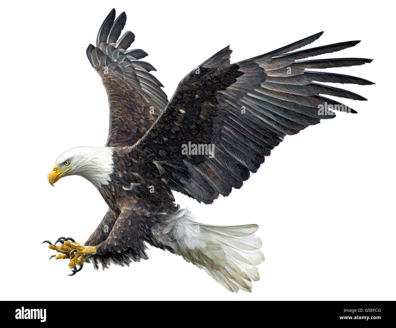 Bald eagle flying attack hand draw and paint color on white background illustration