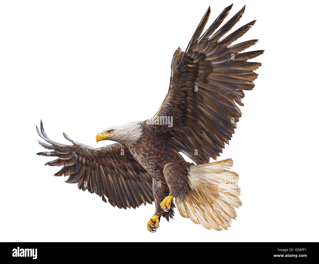 Bald eagle flying hand draw and paint color on white background illustration