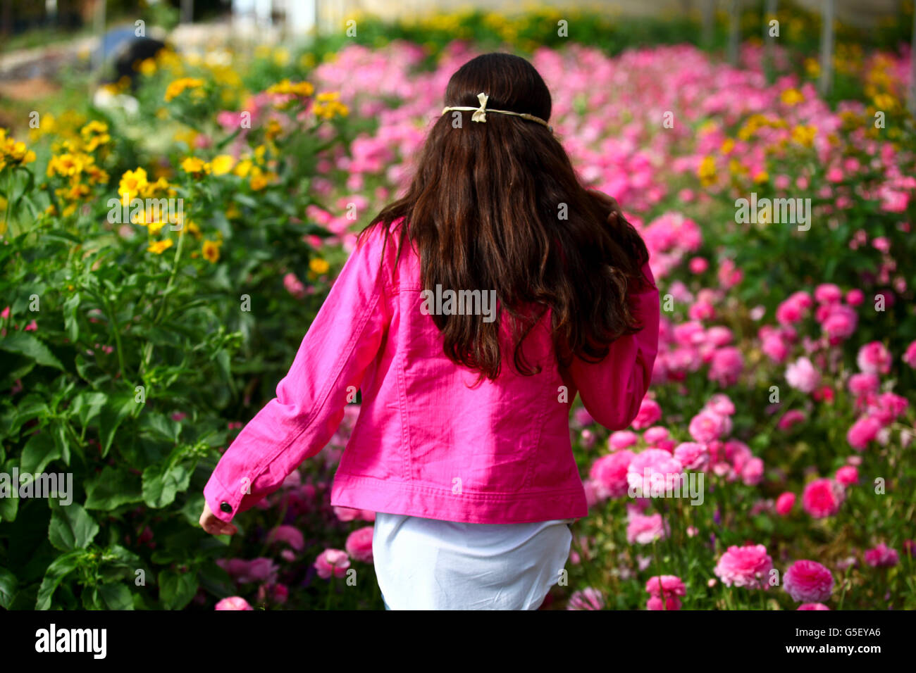 Young preteen girl of 12 in a hothouse of pink flowers - Stock Image