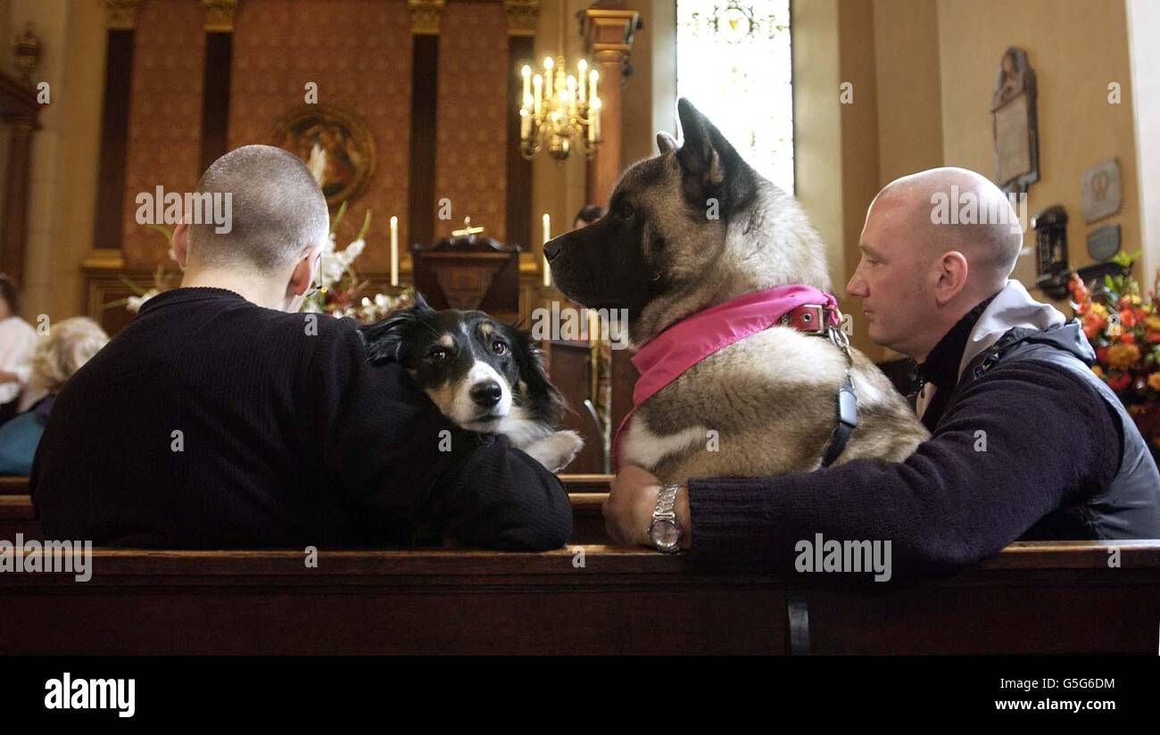 Animal Service and Blessing of Pets - Stock Image