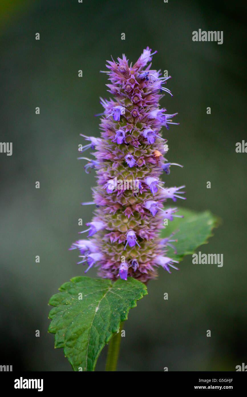Blumen, Garten, Berlin. - Stock Image