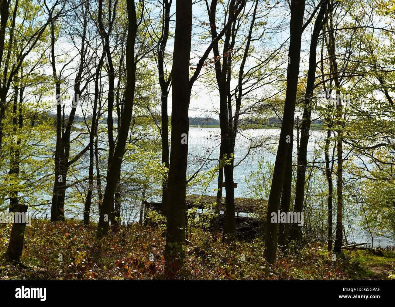Vying view of large freshwater lake with birdwatch cabin on shores of Rutland Water through woodland of Wetland - Stock Image