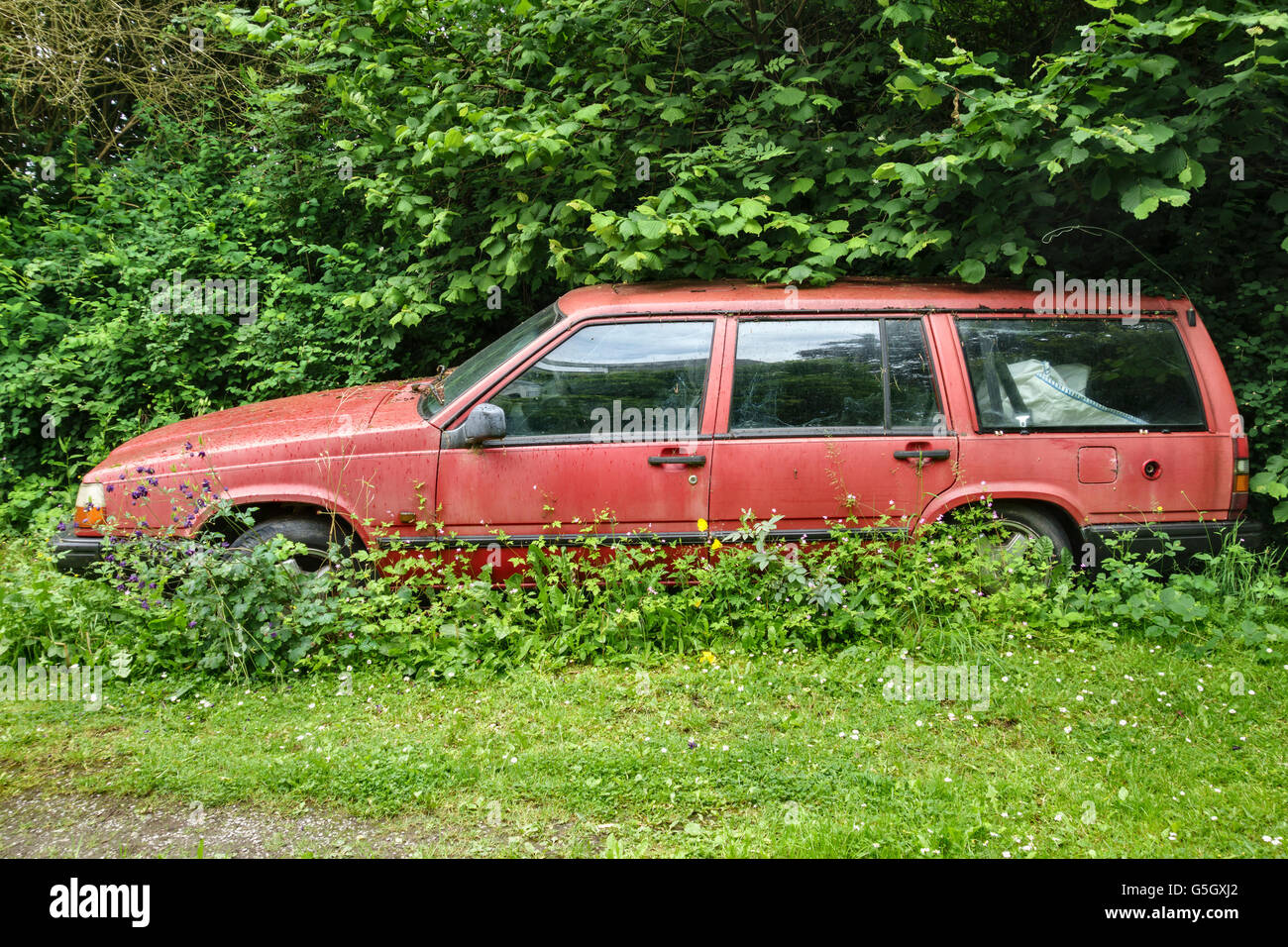 Wales, UK. Weeds growing over an old abandoned red Volvo estate car ...