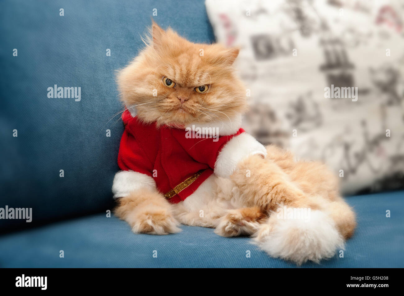 Persian cat with Santa Claus costume sitting on couch. - Stock Image