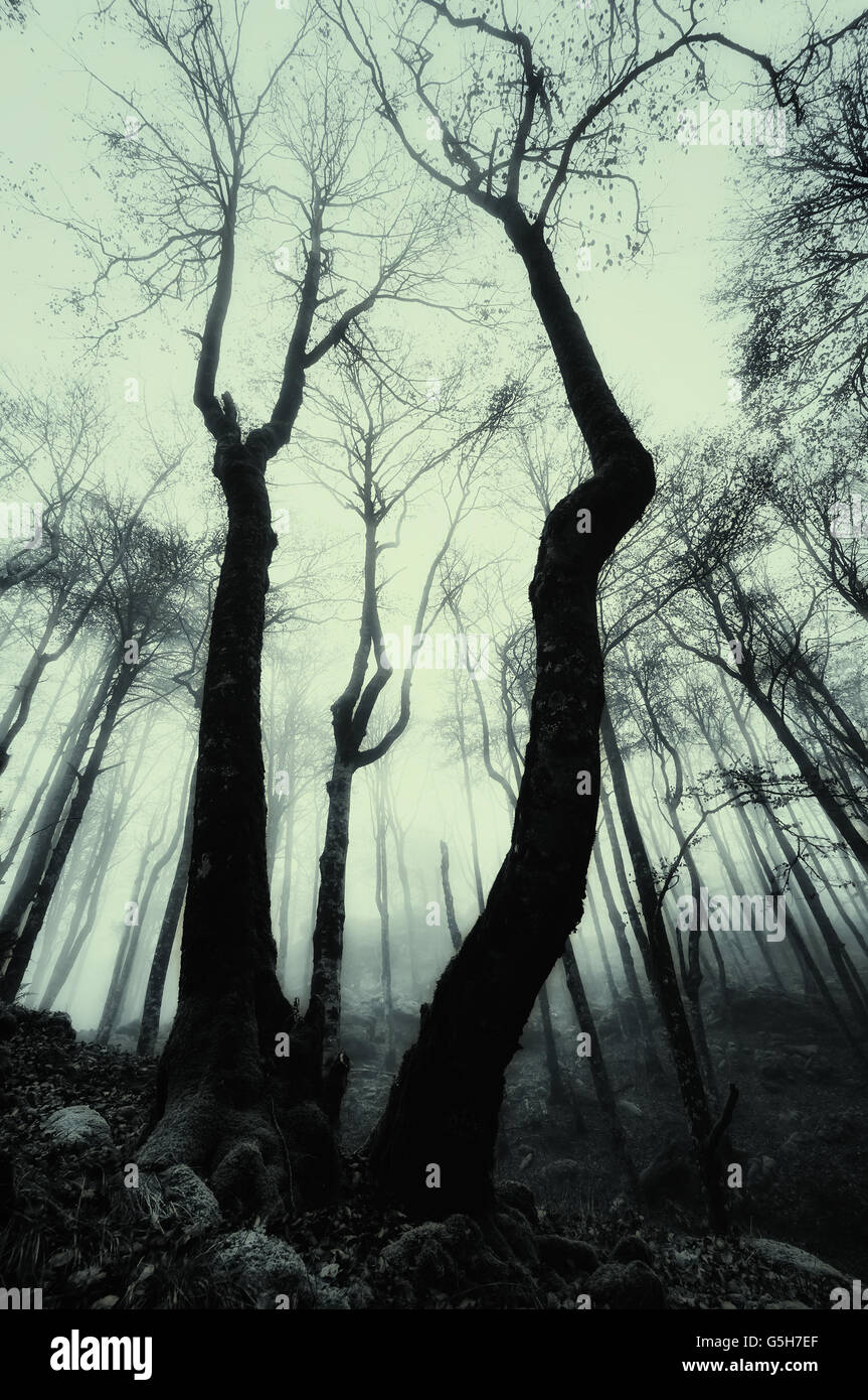 scary misty forest with monochrome tone - Stock Image