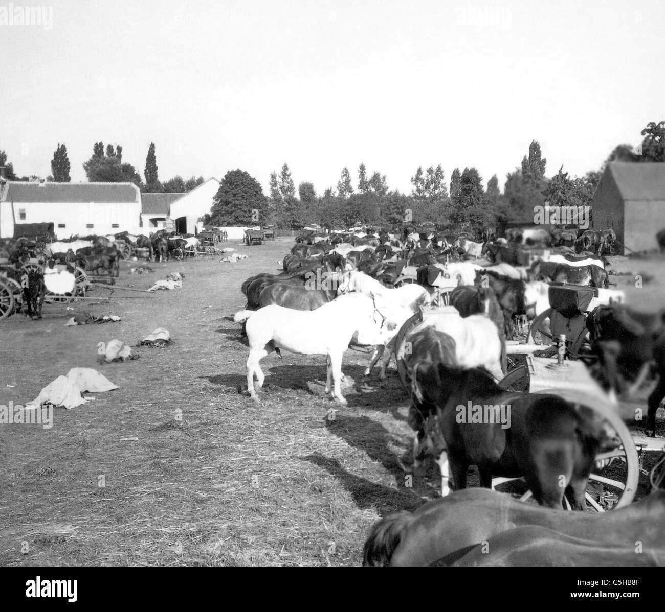 World War One - Horses - Belgian Camp - Netherlands - Stock Image