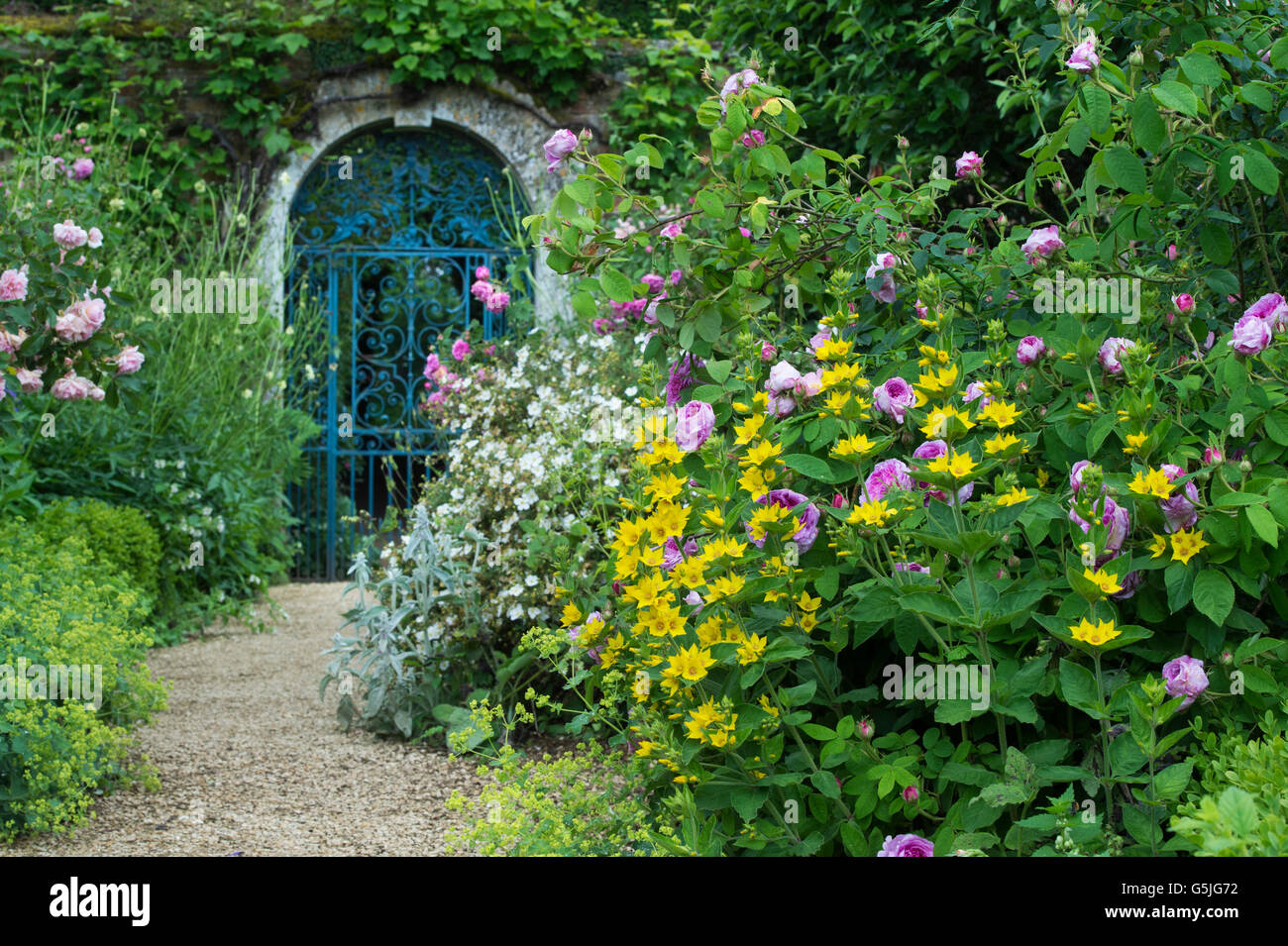 Walled Garden Blue Wrought Iron Gate At Rousham House And