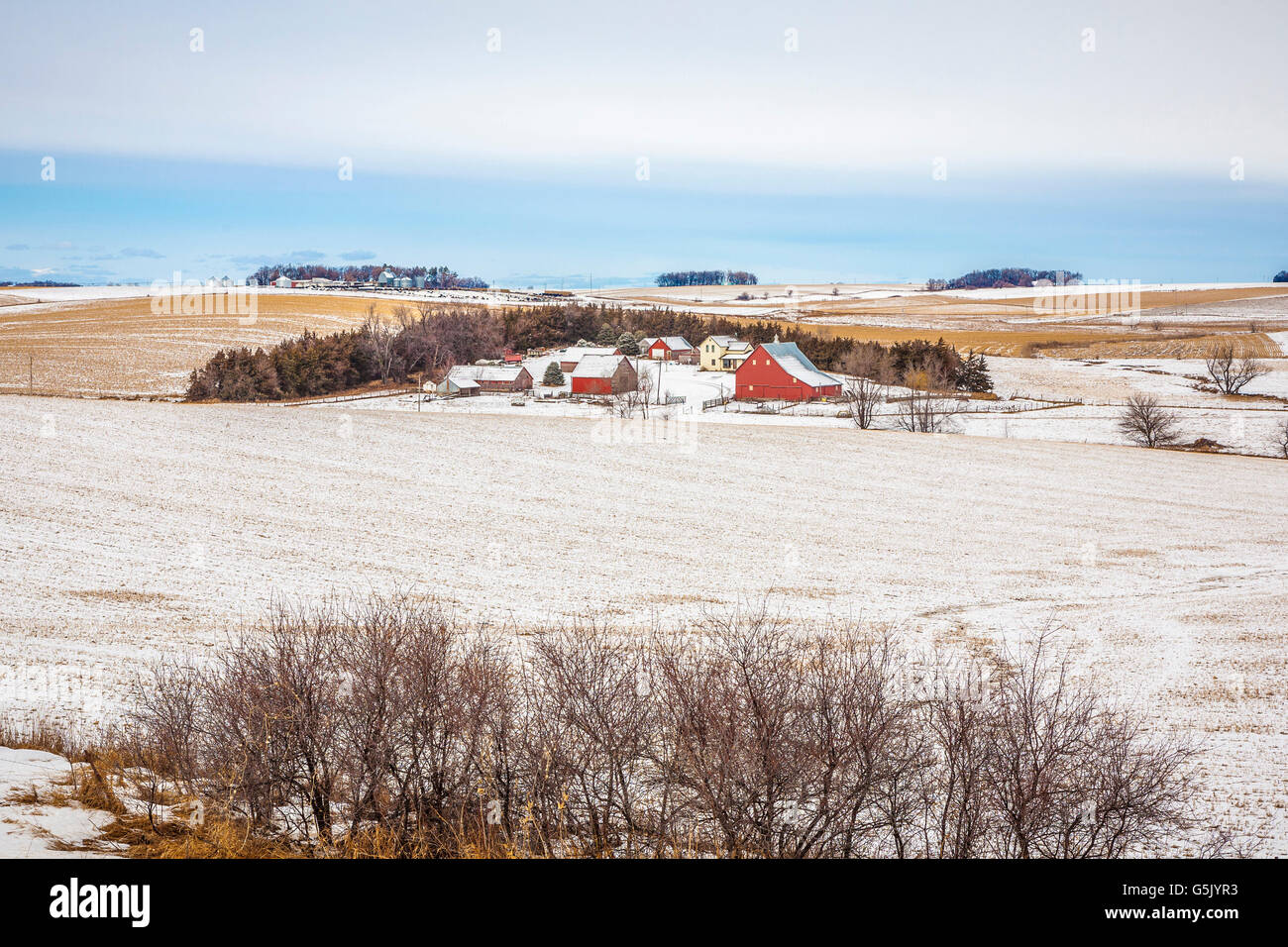Farmhouse with several barns surrounded by grain fields in rural north east Nebraska - Stock Image
