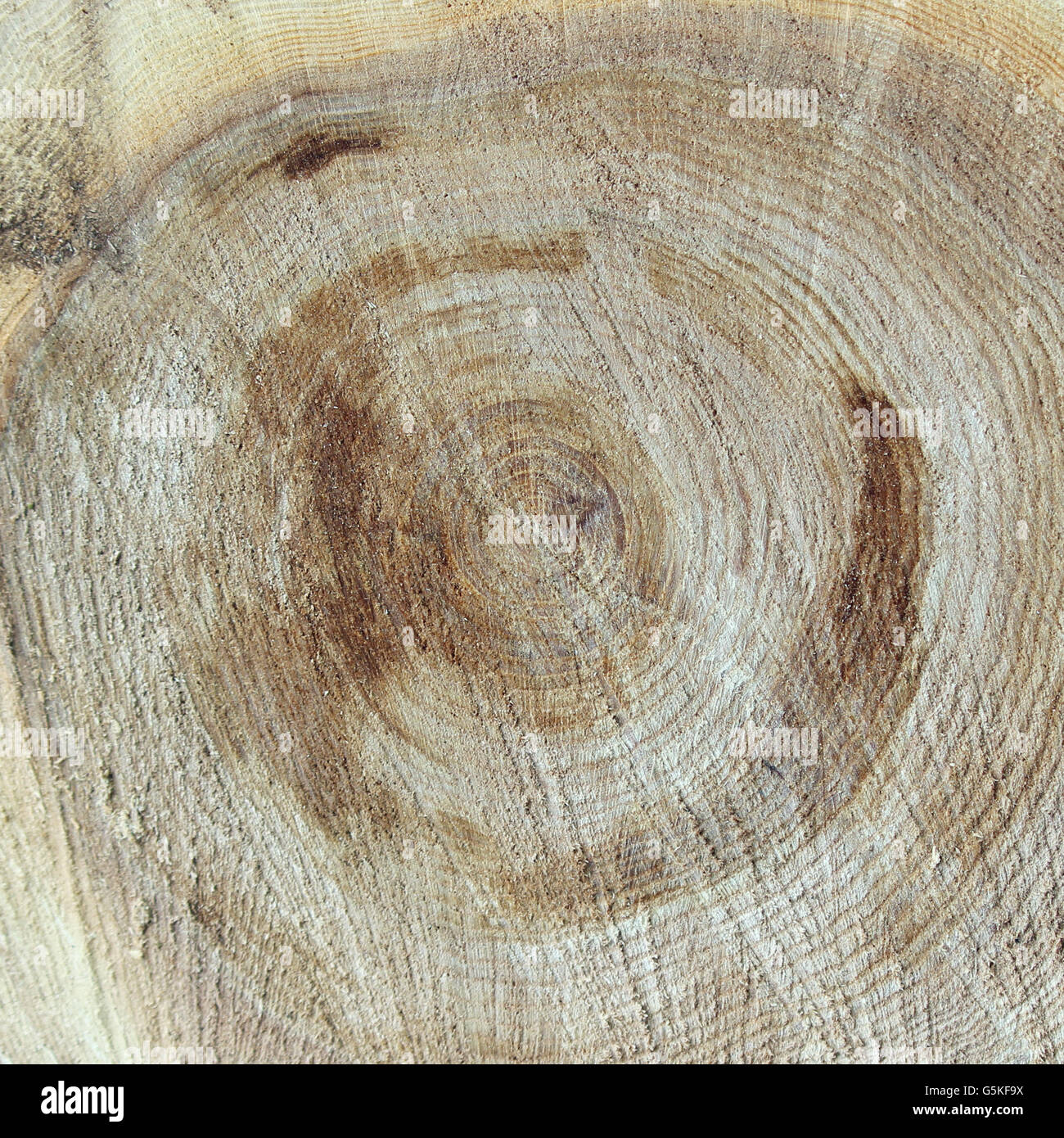 Texture saw cut the old tree. - Stock Image