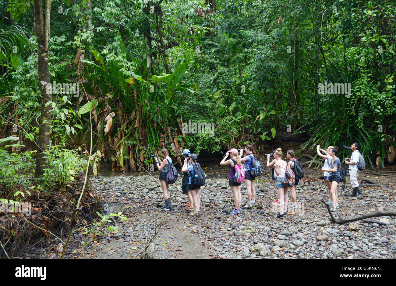 Student school ecotourist group with guide looking at wildlife, Corcovado National Park, Costa Rica - Stock Image