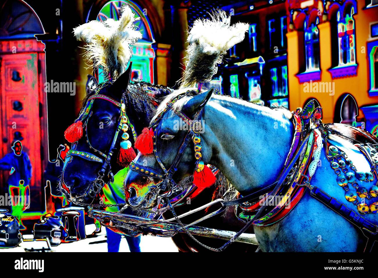Beautifully decorated horses of a carriage on Krakows famous market place Rynek - Stock Image