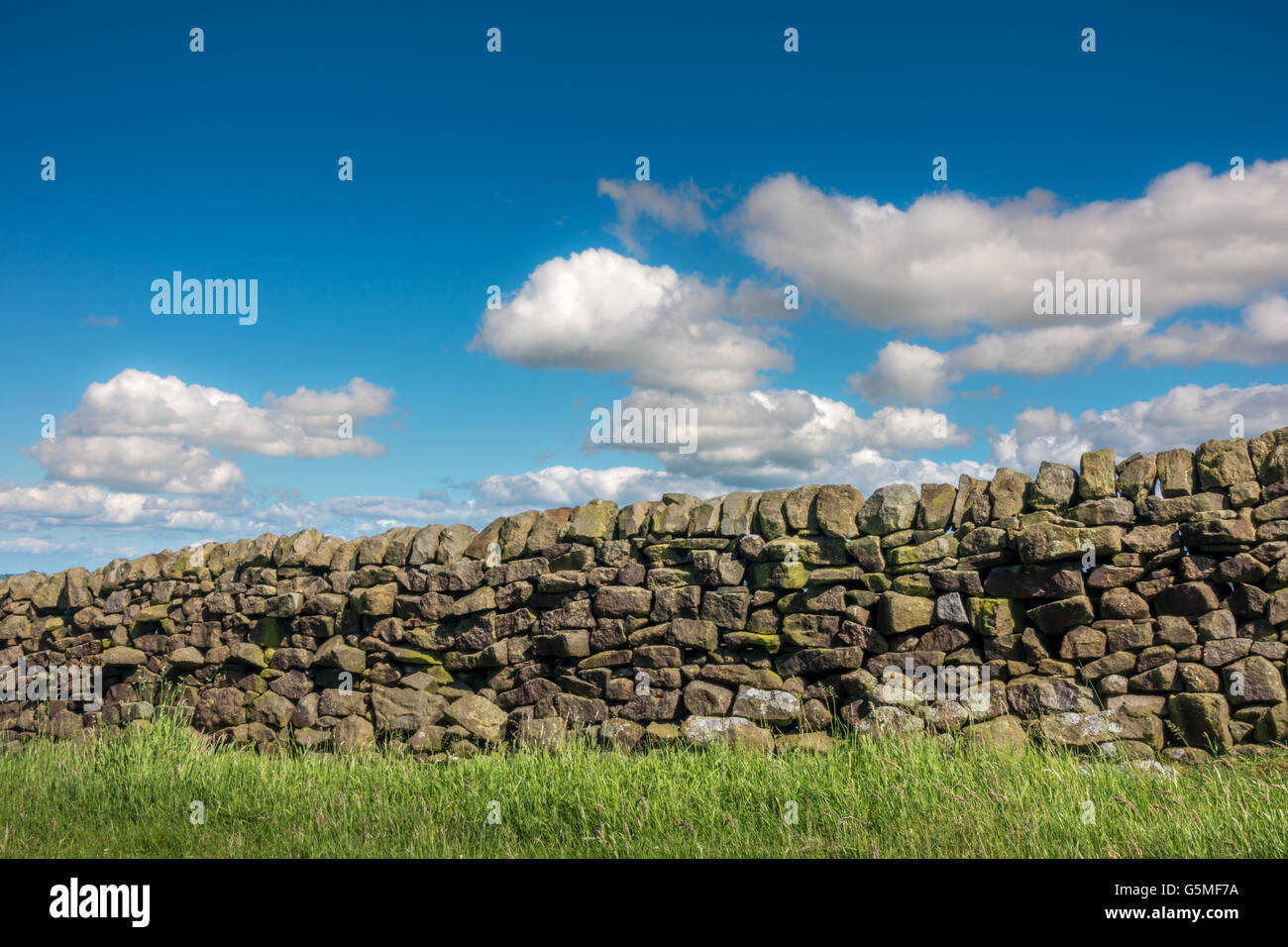 Gritstone stone wall with blue sky and green grass, Yorkshire, England, UK - Stock Image