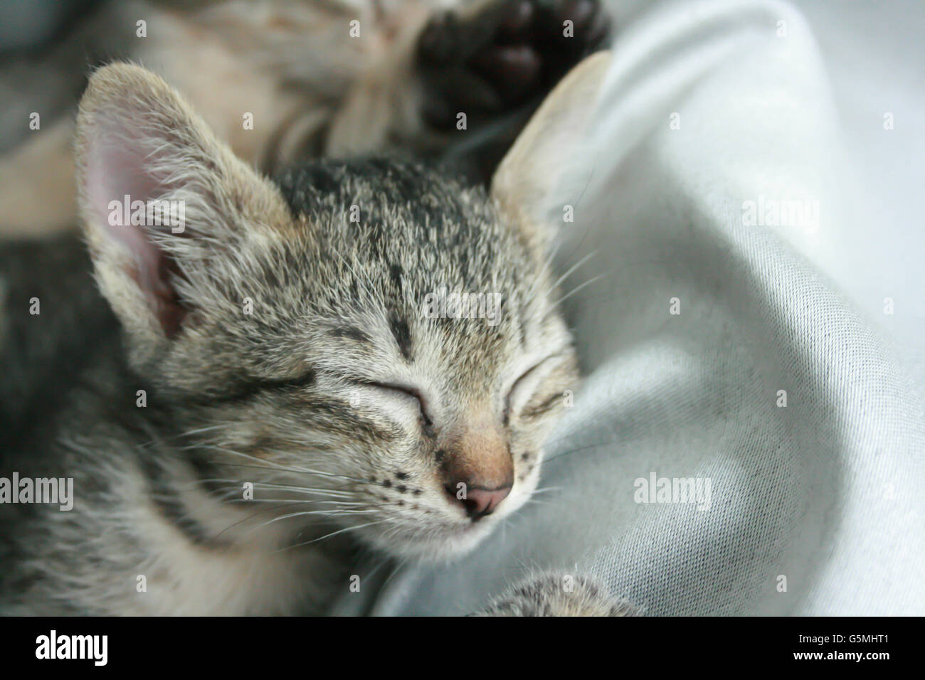 Adorable Funny Cute Kitten Cat Close Eye Sleep Tight With Brother
