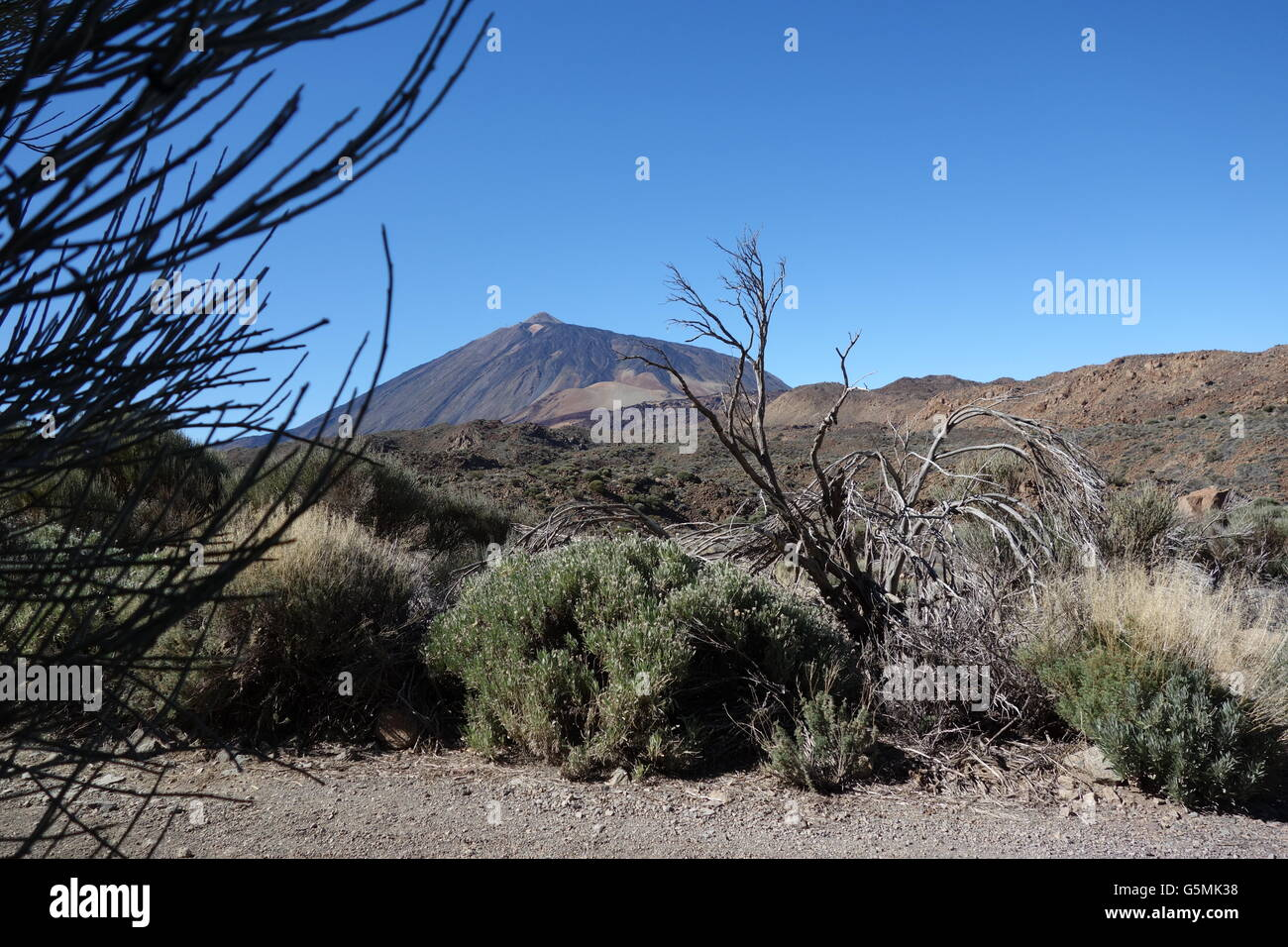 View on Pico del Teide from Rura de las Canadas, Tenerife - Stock Image