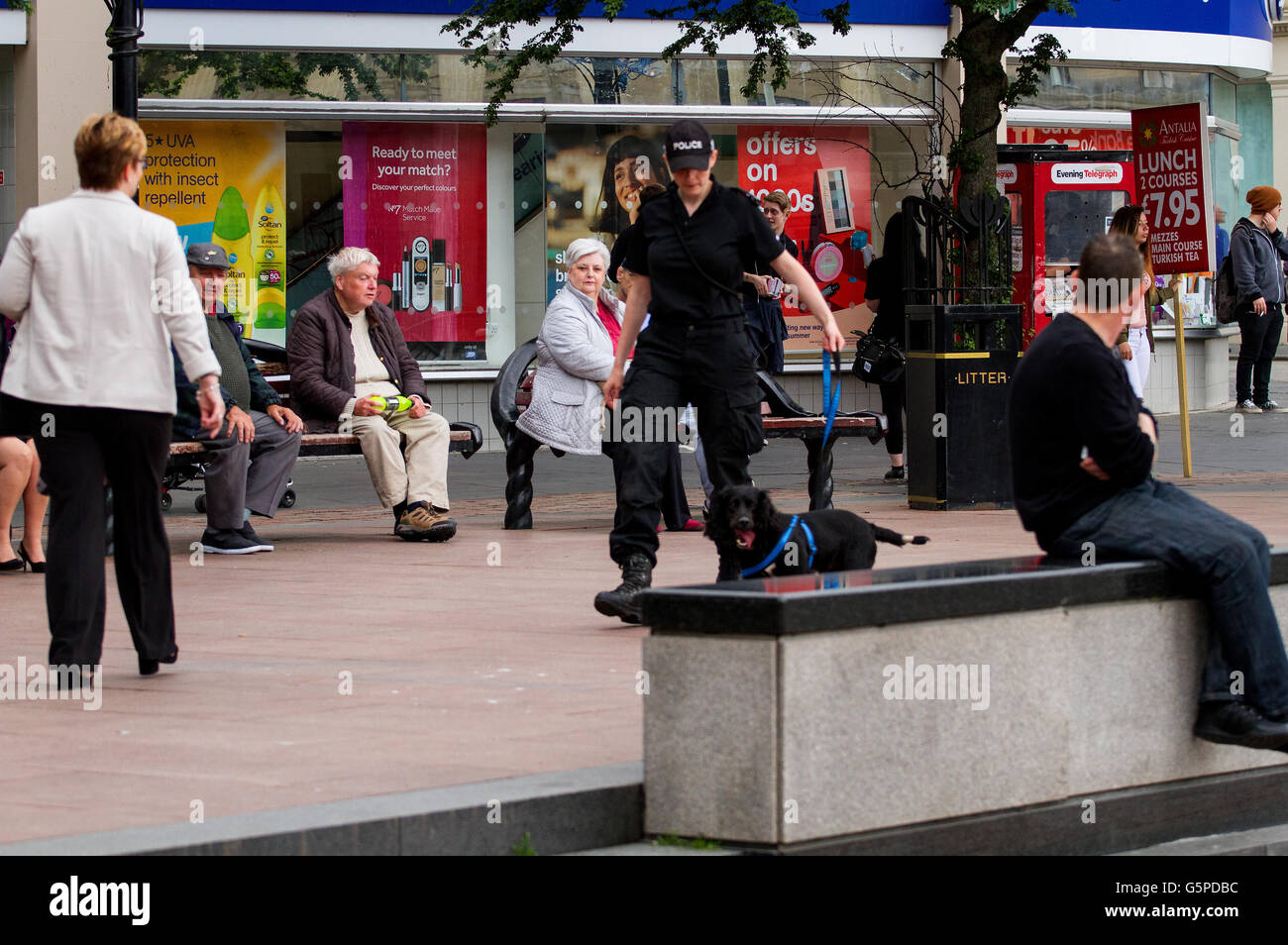 Dundee, Tayside, Scotland, UK. June 22nd 2016. A Police Scotland policewoman training a sniffer dog in Dundee city - Stock Image