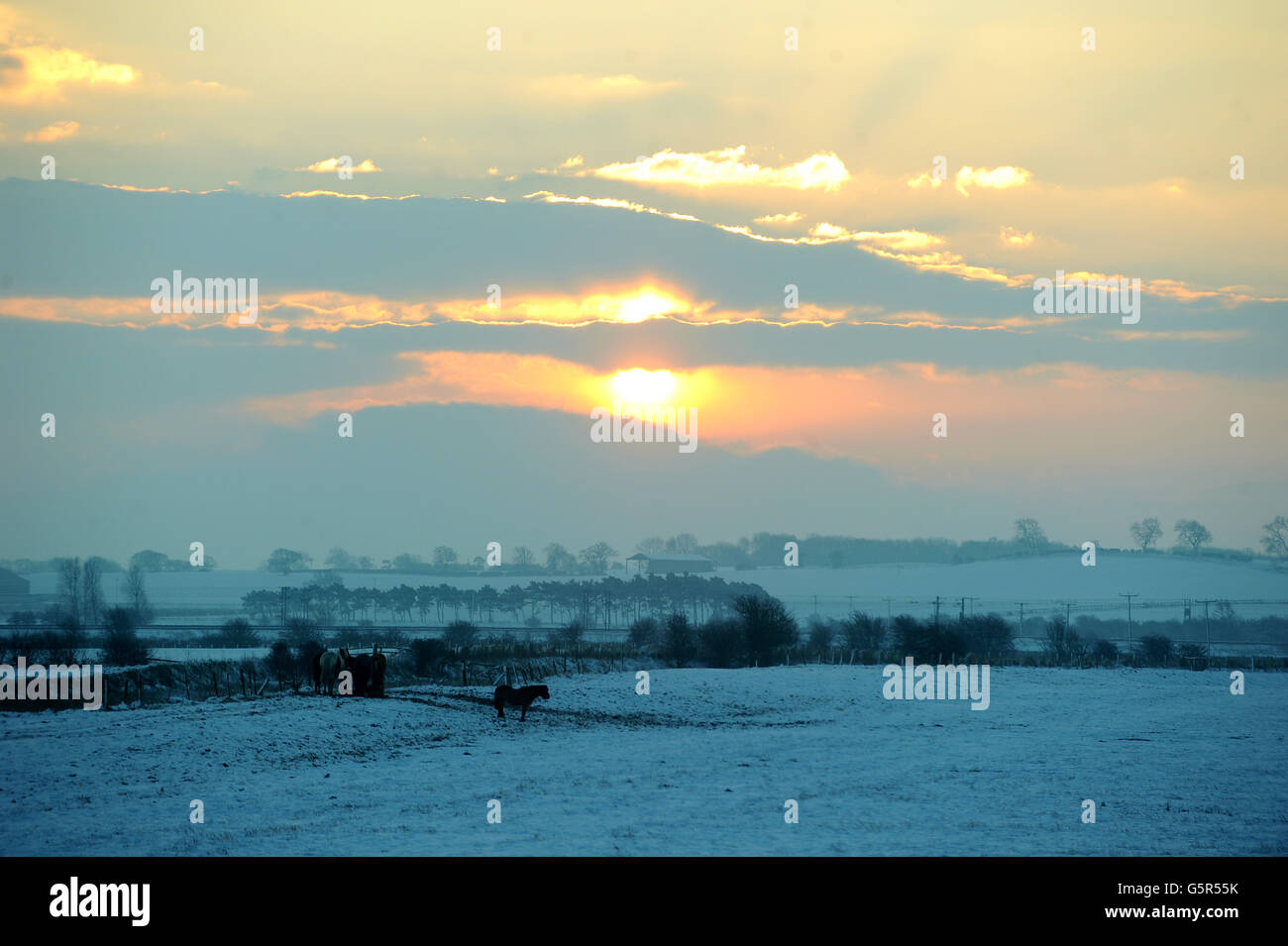 Horses in a snow covered field in the outskirts of Durham today, as the sun rises over County Durham. Stock Photo