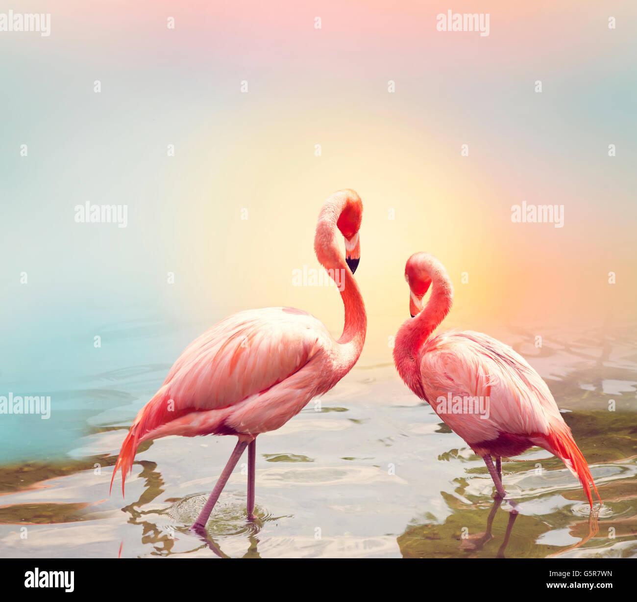 Two Pink Flamingos near water - Stock Image