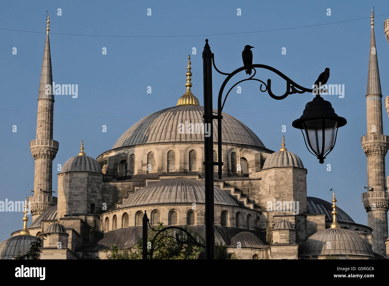 Birds perch on a light pole in front of the Blue mosque in Sultanahmet park, Istanbul, Turkey - Stock Image