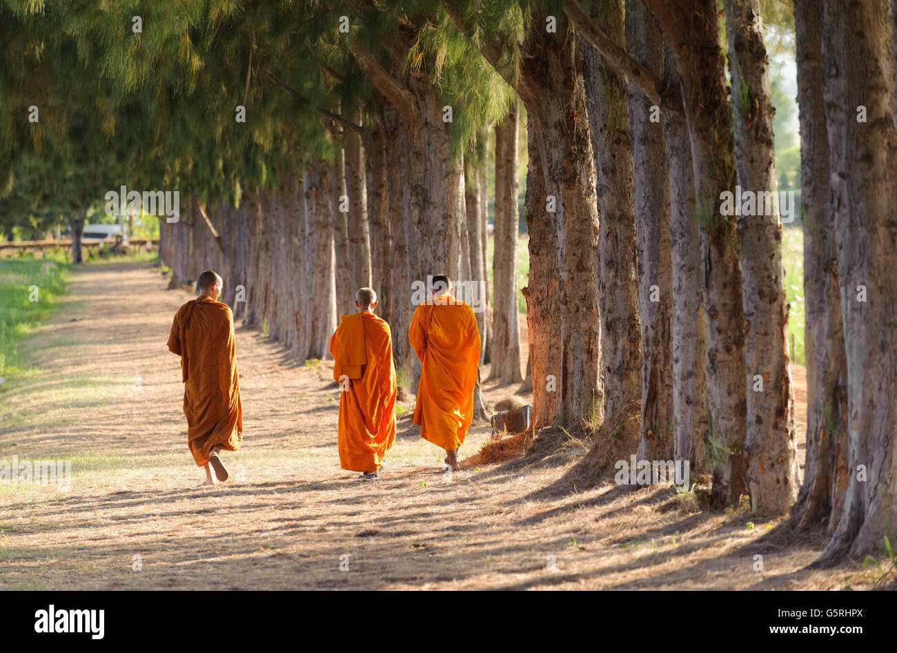 Buddhist monk travel pine forest in Thailand Stock Photo