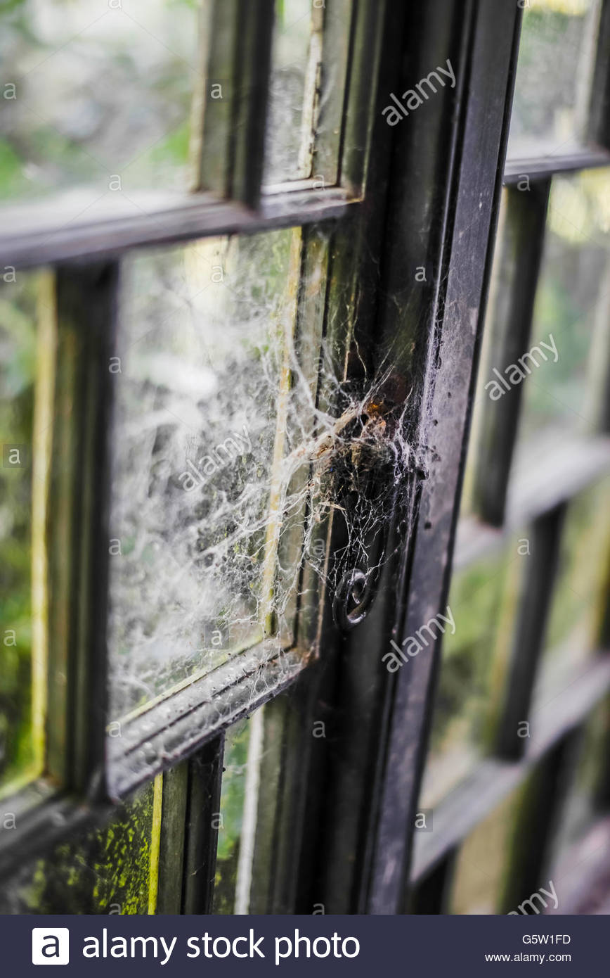 Old wooden framed window pains from summerhouse covered in moss and cobwebs. - Stock Image