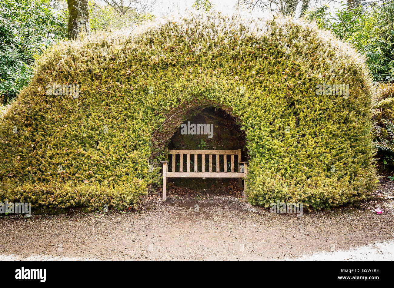 Secluded seat sheltered by yew in Trengwainton gardens UK - Stock Image