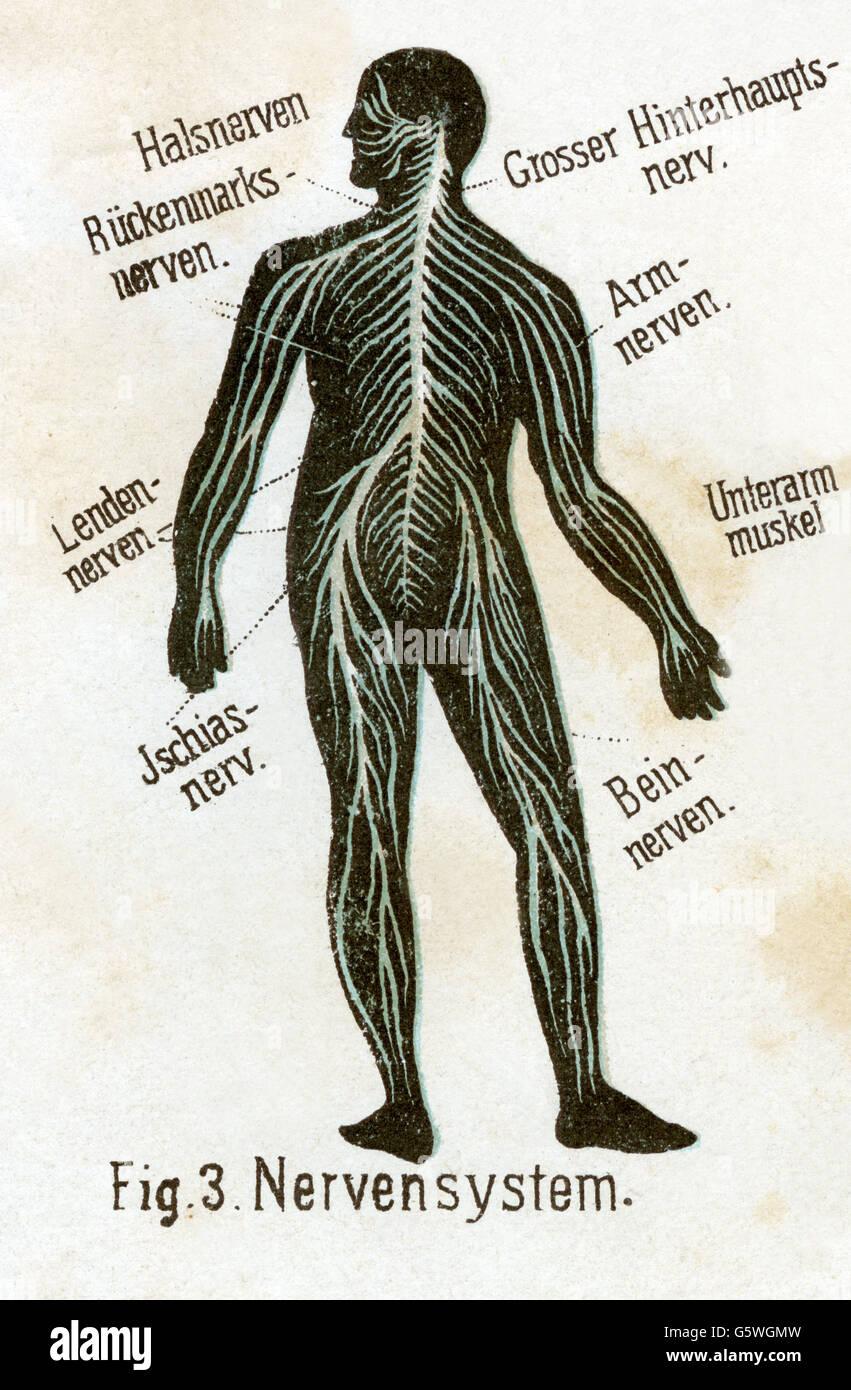 Erfreut L2 Lenden Fotos - Menschliche Anatomie Bilder - madeinkibera.com