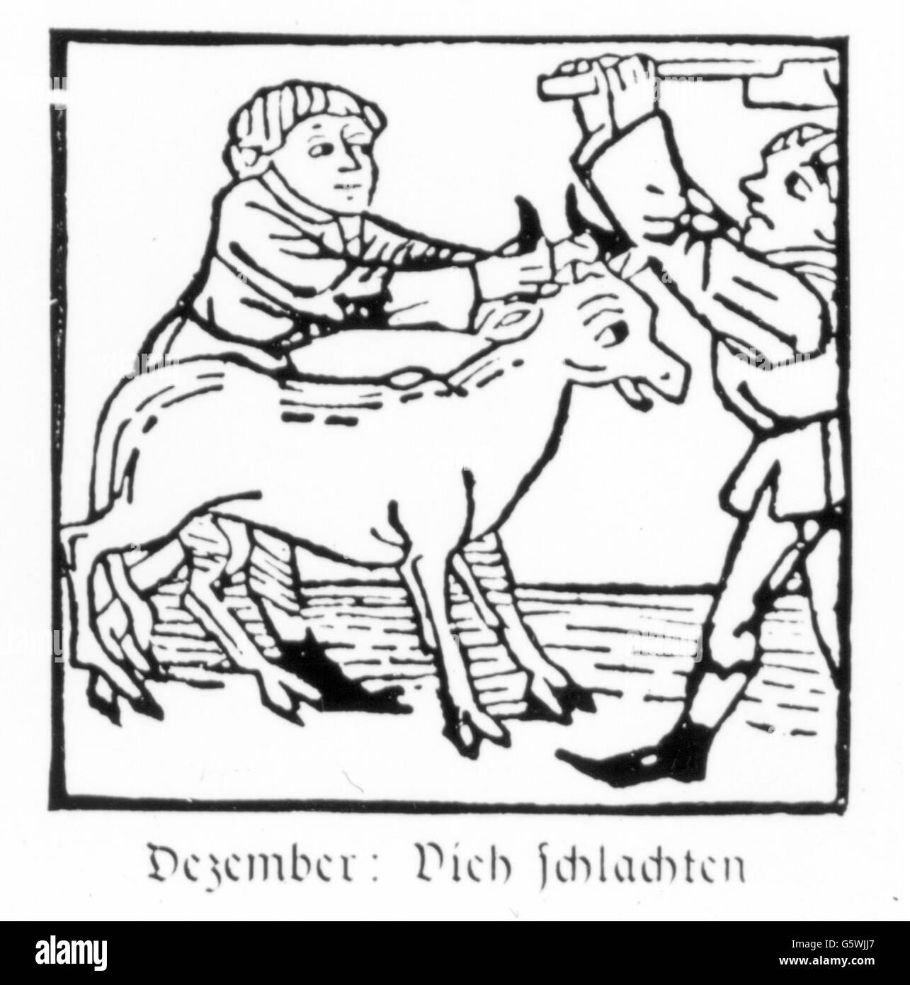 season, 'December', slaughtering of cattle, woodcut, print: Johann Bämler, Augsburg, circa 1483, Additional - Stock Image