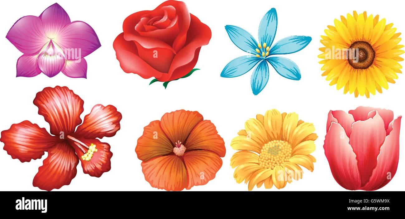Vari Tipi Di Fiori.Different Kind Of Flowers Illustration Stock Vector Art