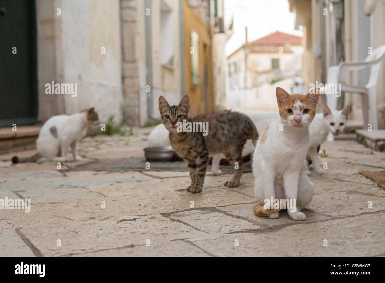 feral cats in an alley way on the tiny Greek island of Paxos.  A team of volunteers on Paxos support a charitable - Stock Image