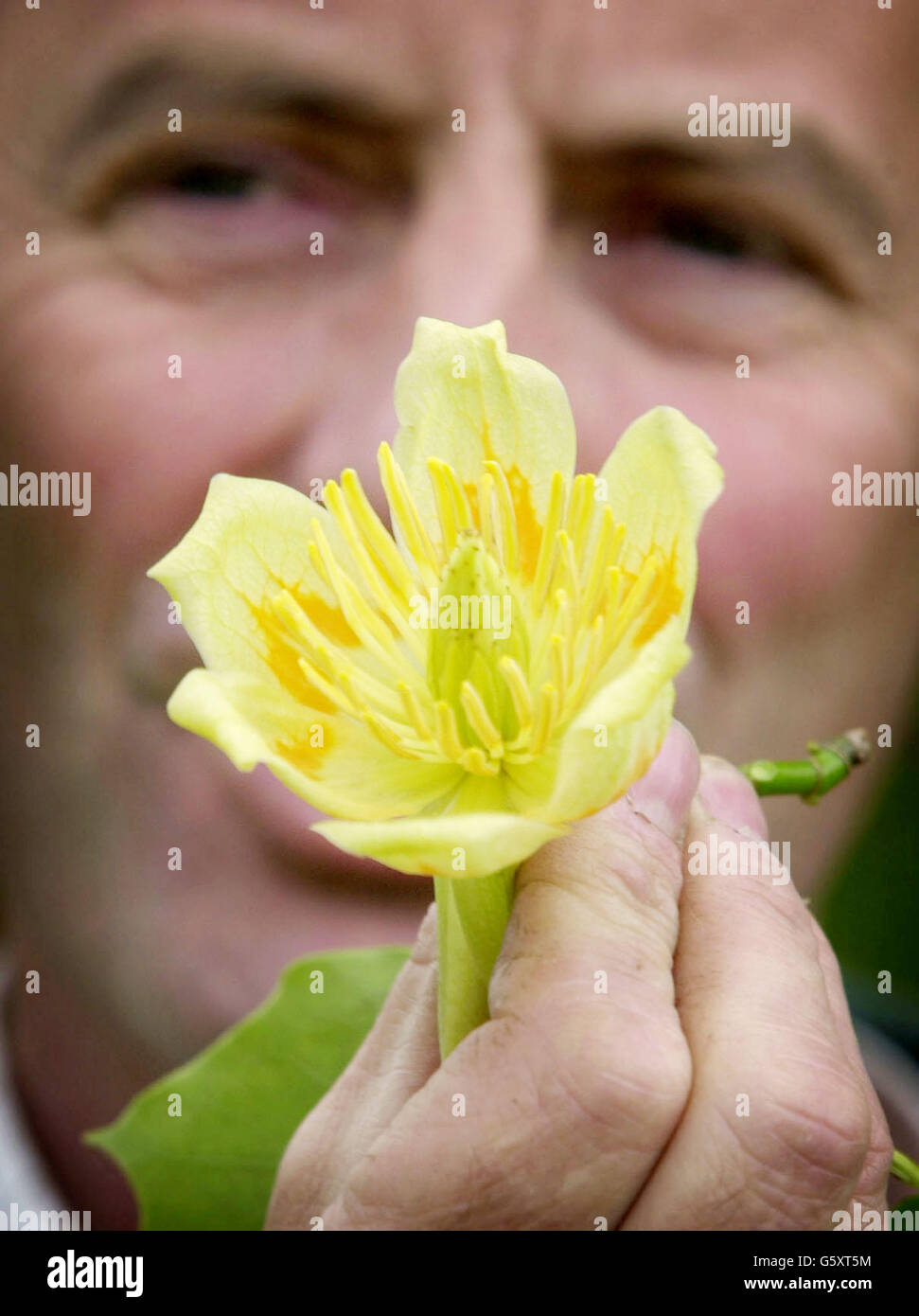 The Real Attraction Today Are The Exotic Yellow Tulip Shaped Flowers