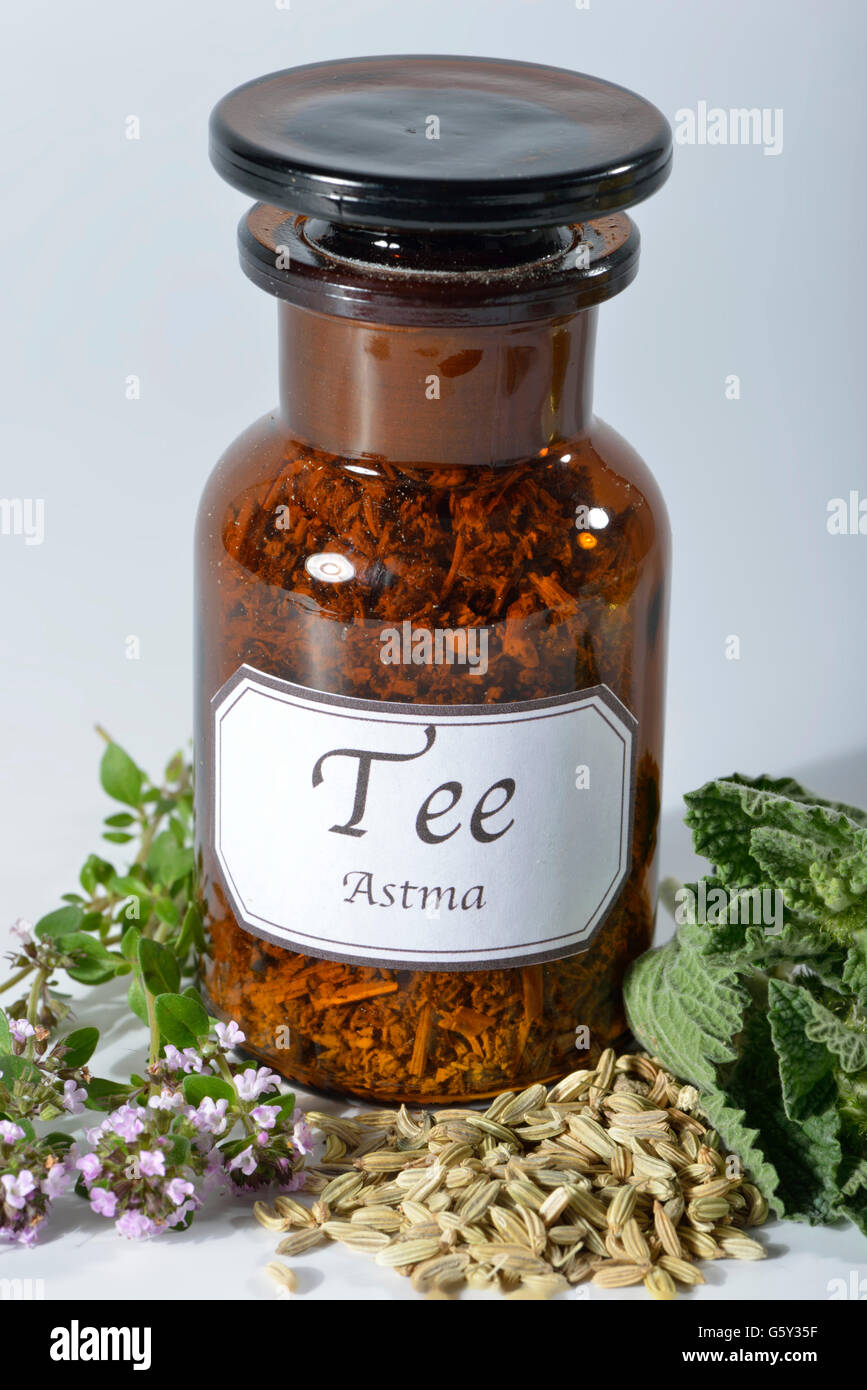 Asthma tea, thyme, common thyme, fennel fruit, fennel, fennels / (Marrubium vulgare), (Thymus vulgaris), (Foeniculum - Stock Image