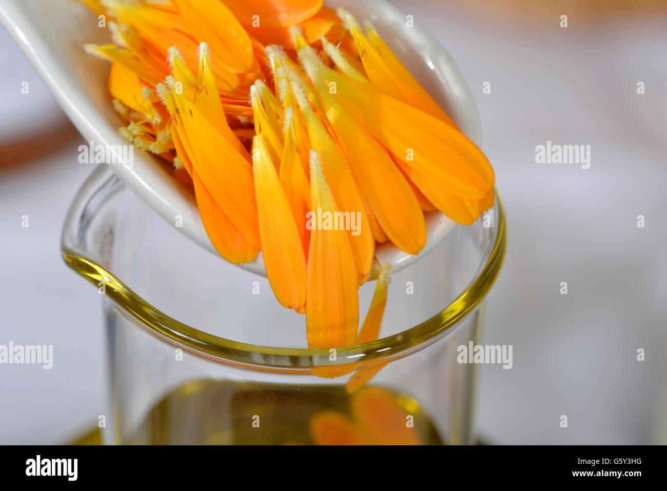Production Marigold ointment / (Calendula officinalis) - Stock Image