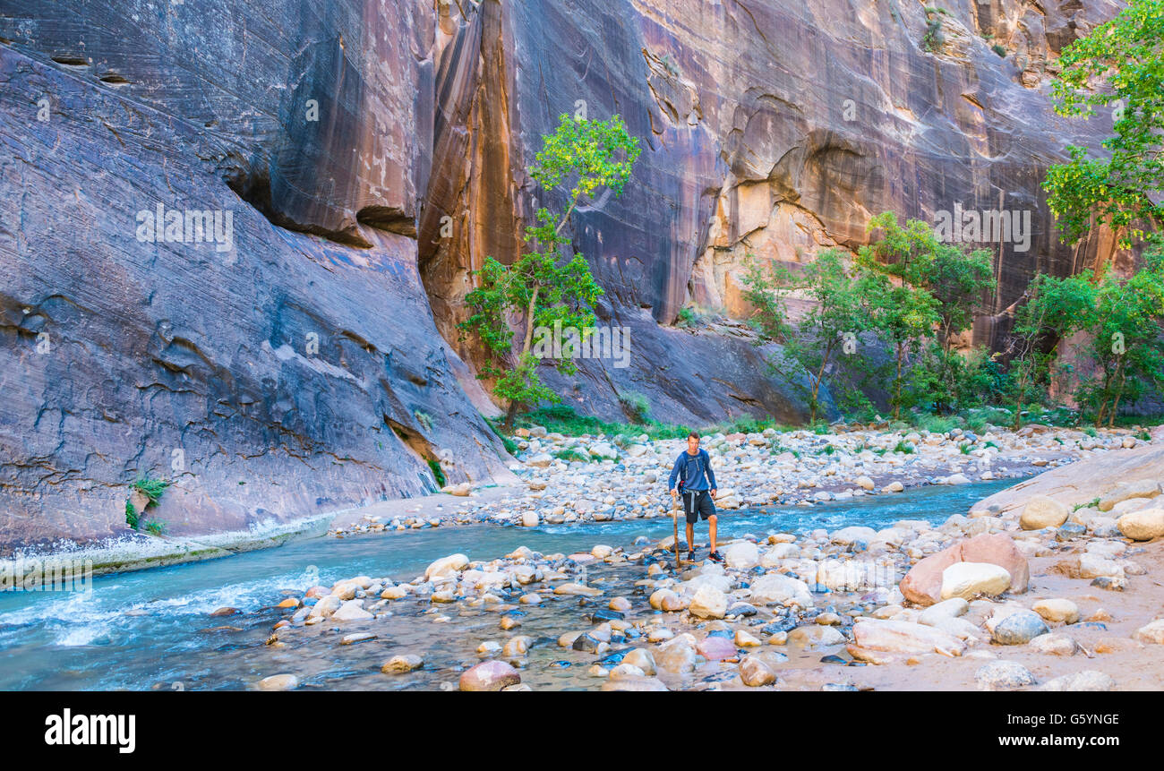 Walker standing in river, Zion Narrows, narrow of the Virgin River, steep faces of Zion Canyon, Zion National Park, - Stock Image