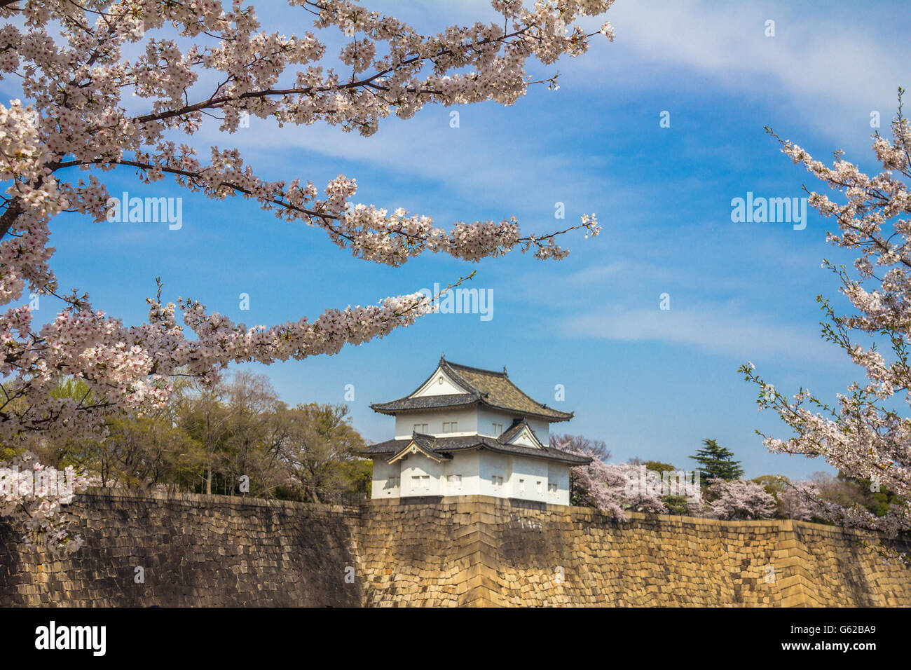 Cherry blossoms during spring in Osaka Castle Stock Photo