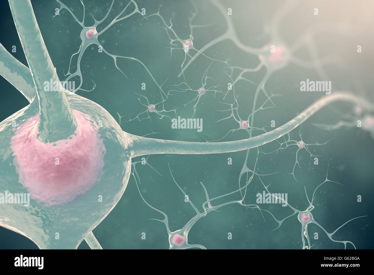 The neurons of the nervous system with the effect blurring and light. 3d illustration nerve cells Stock Photo