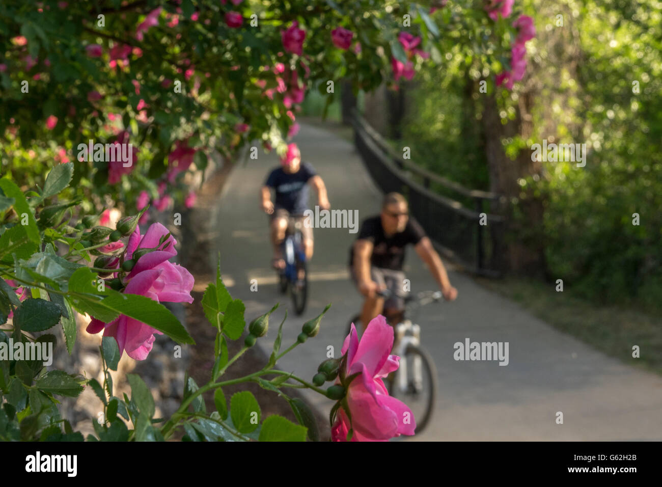 Bicyclists, river walk, downtown Durango Colorado - Stock Image