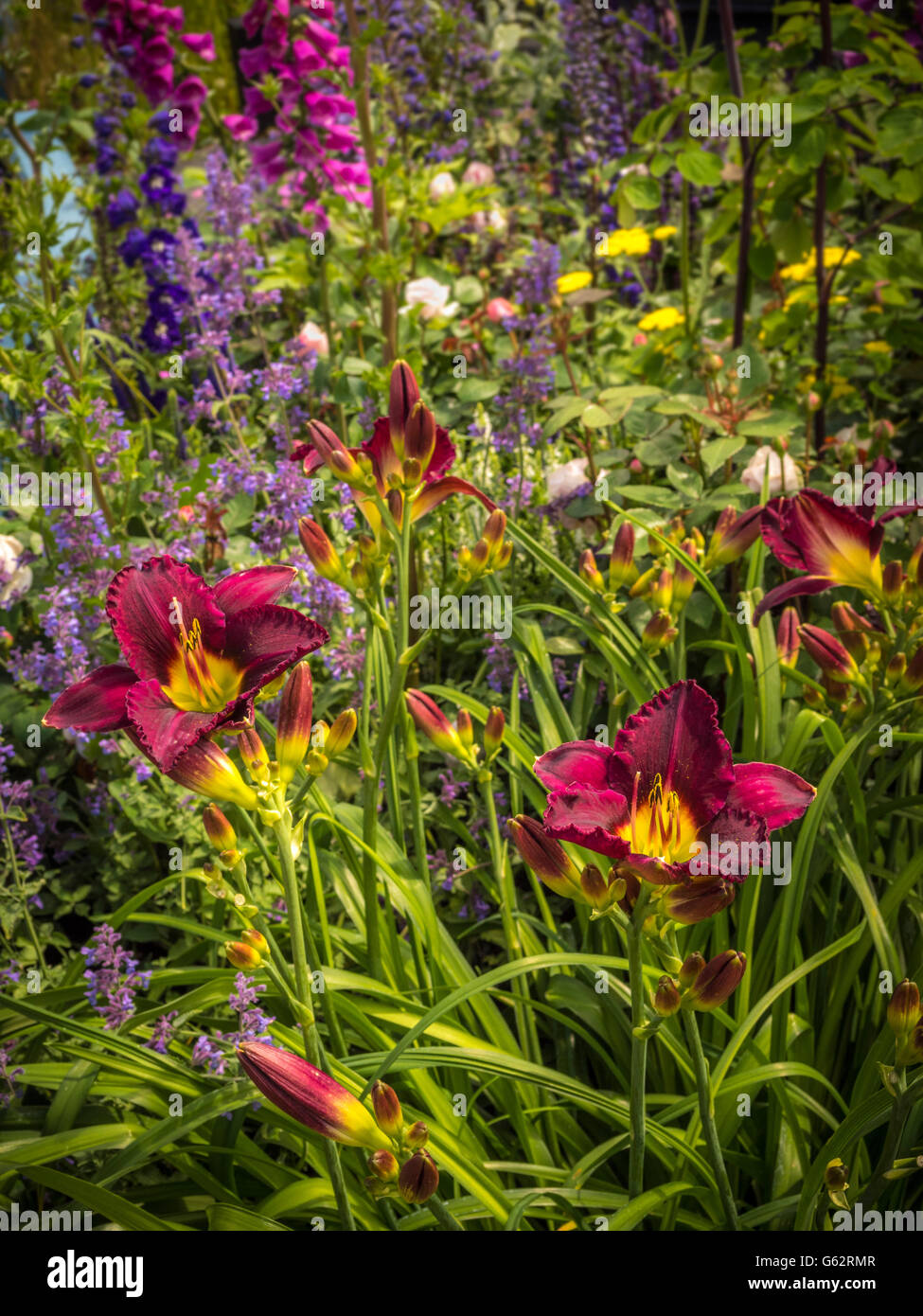 Lilies in flowerbed - Stock Image
