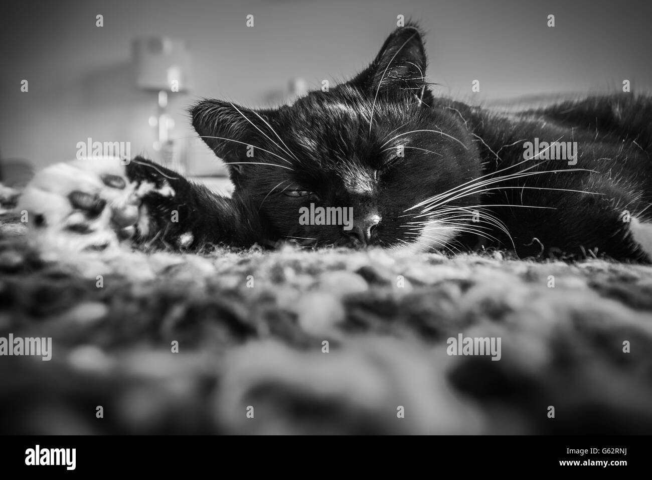 Cat laid down with one eye slightly open - Stock Image
