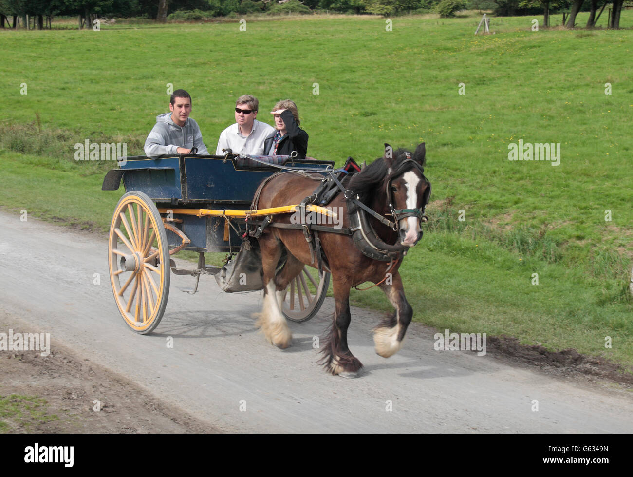 Tourists on a horse trap ride (horse & carriage) Muckross House, Killarney in County Kerry, Ireland. - Stock Image