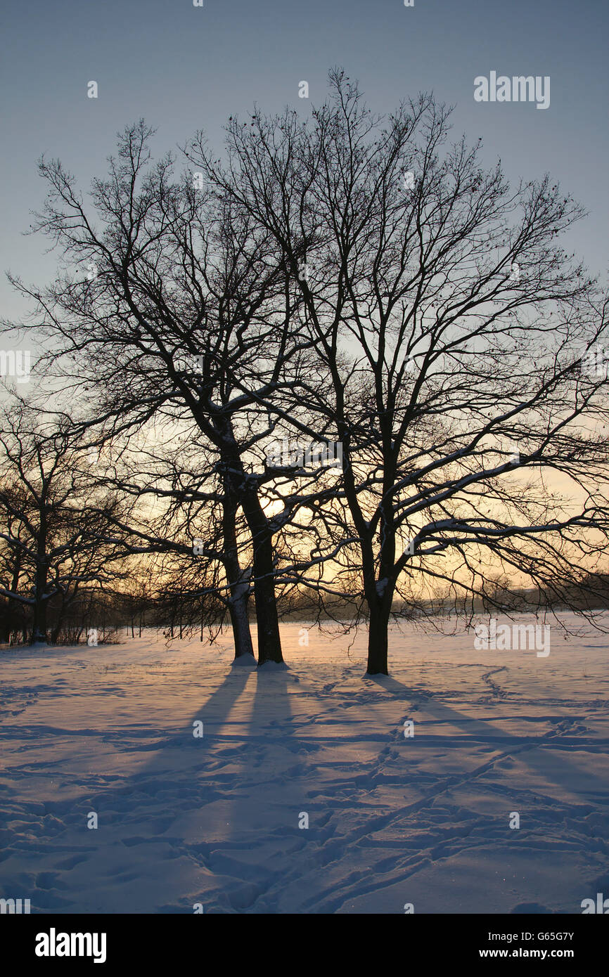 Winter sunset with trees in Volkspark Kleinzschocher park in Leipzig, Germany - Stock Image