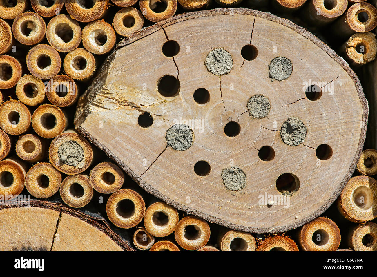 Bee hotel, artificial nesting aid for mason bees, breeding tunnels partially sealed with clay soil - Stock Image