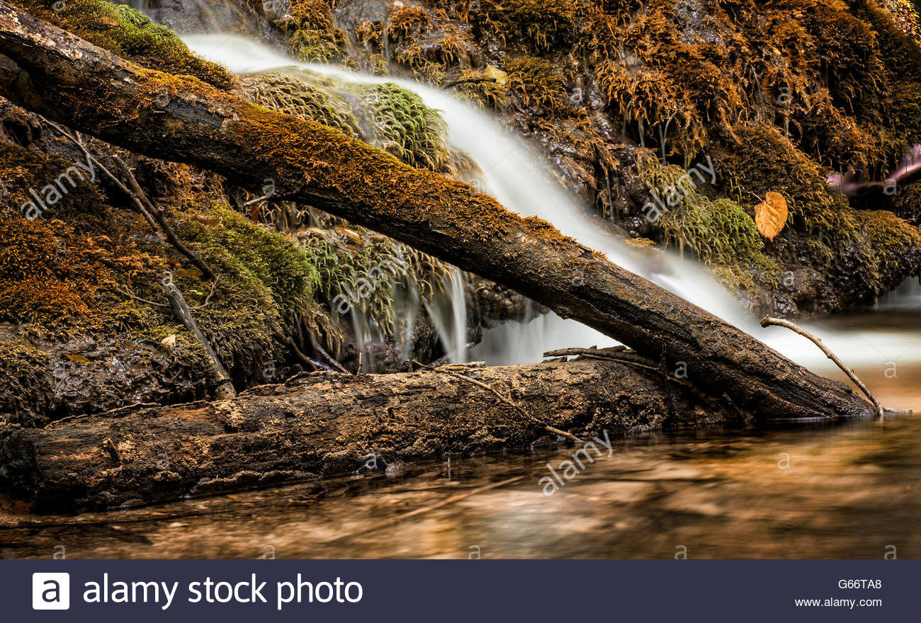 Waterfall in primeval forest - Stock Image