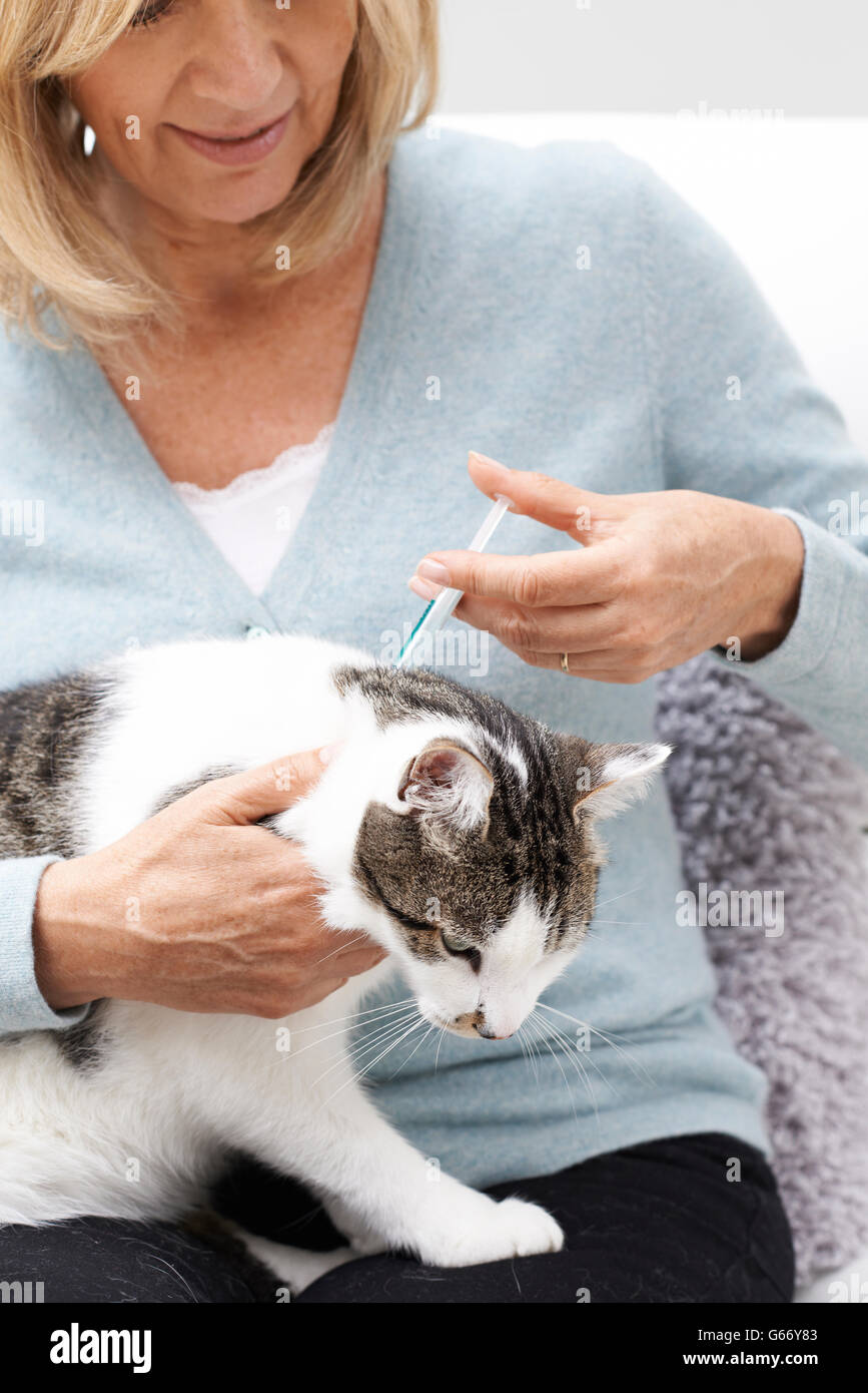 Woman Applying Tick And Flea Treatment To Pet Cat - Stock Image