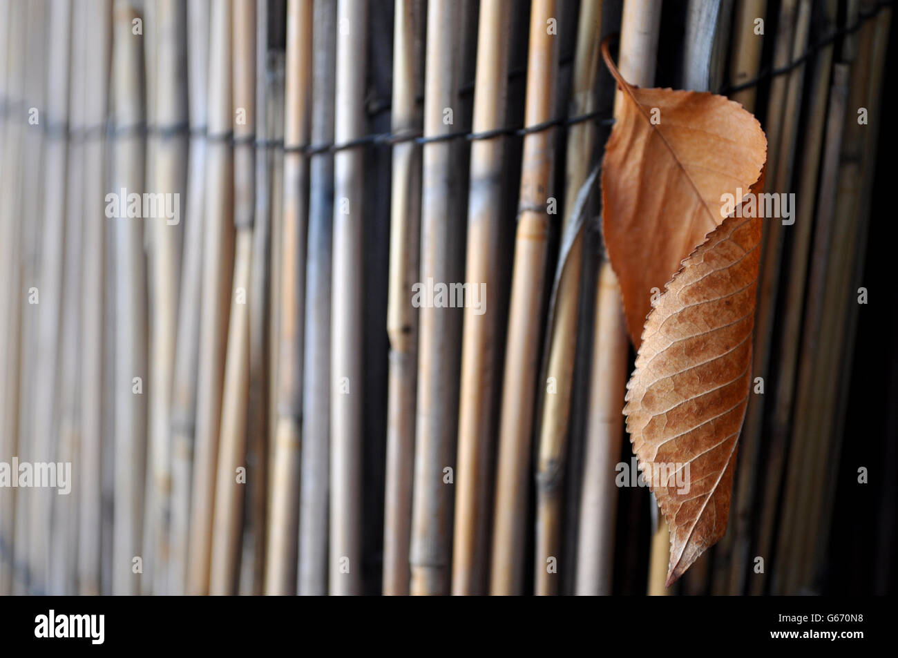 dry leaf hanging from a rolled rods,  autumn picture - Stock Image