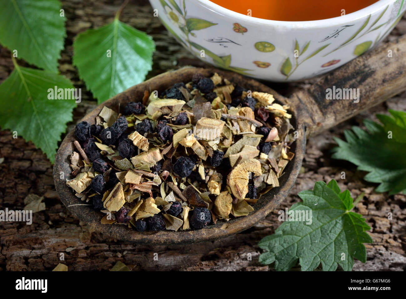 Liquorice root tea blend, birch leaves, stinging nettle, anise, blueberries / (Glycyrrhiza glabra, Betula pendula, - Stock Image